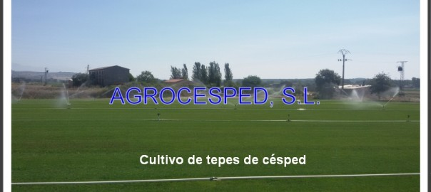 Riego Agrocesped