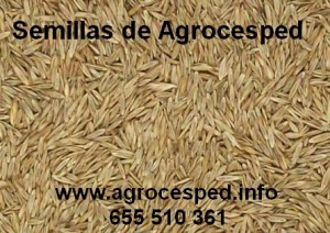 Semillas Agrocesped