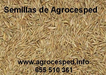Semillas Agrocesped