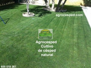 Césped natural Agrocesped